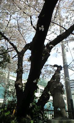 学校には桜