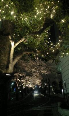 夜桜も綺麗