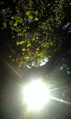 銀杏並木*秋の陽