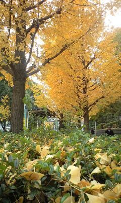 美しい黄色♪