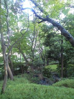 木漏れ日の庭