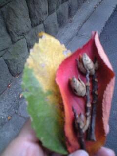 秋が深まりゆき
