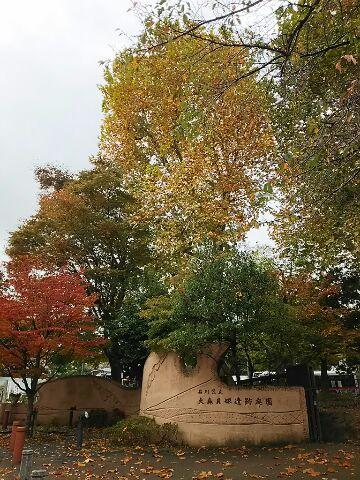 雨上がりの落ち葉