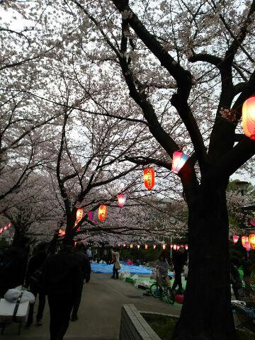 桜の花曇り