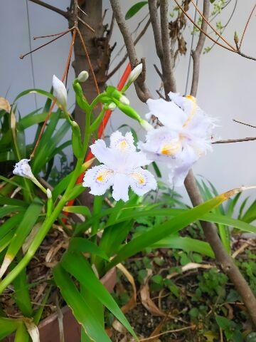 庭にも春がやってきていた